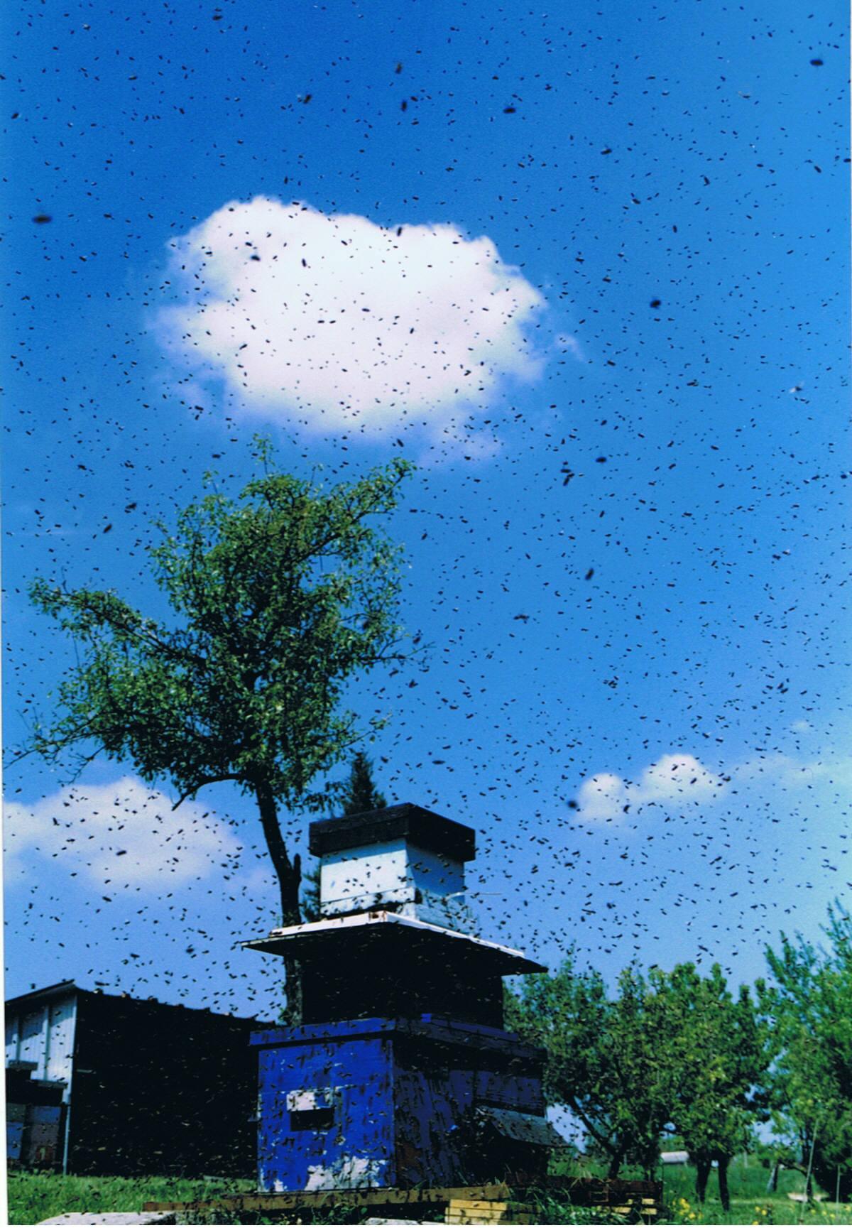 piège essaim abeille